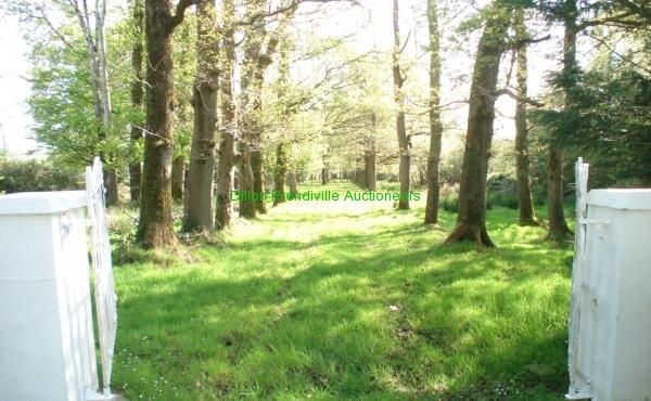480 Springmount Duagh PT 25042019 (29)